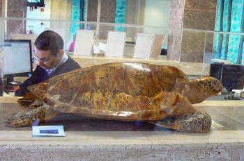 EMARP - Exposição de Zoo de Lagos - nov 2014 - 08